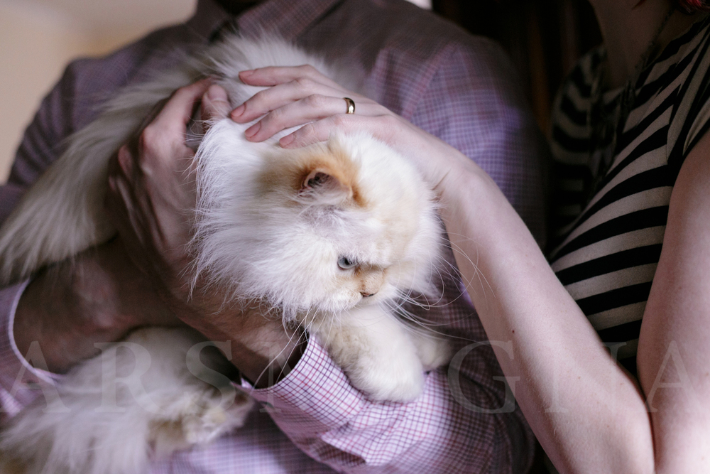 Love this cat cuddle, with brand new wedding rings.