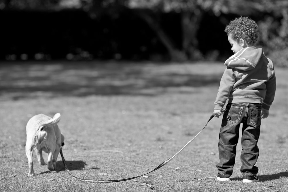 boston family photography with pets