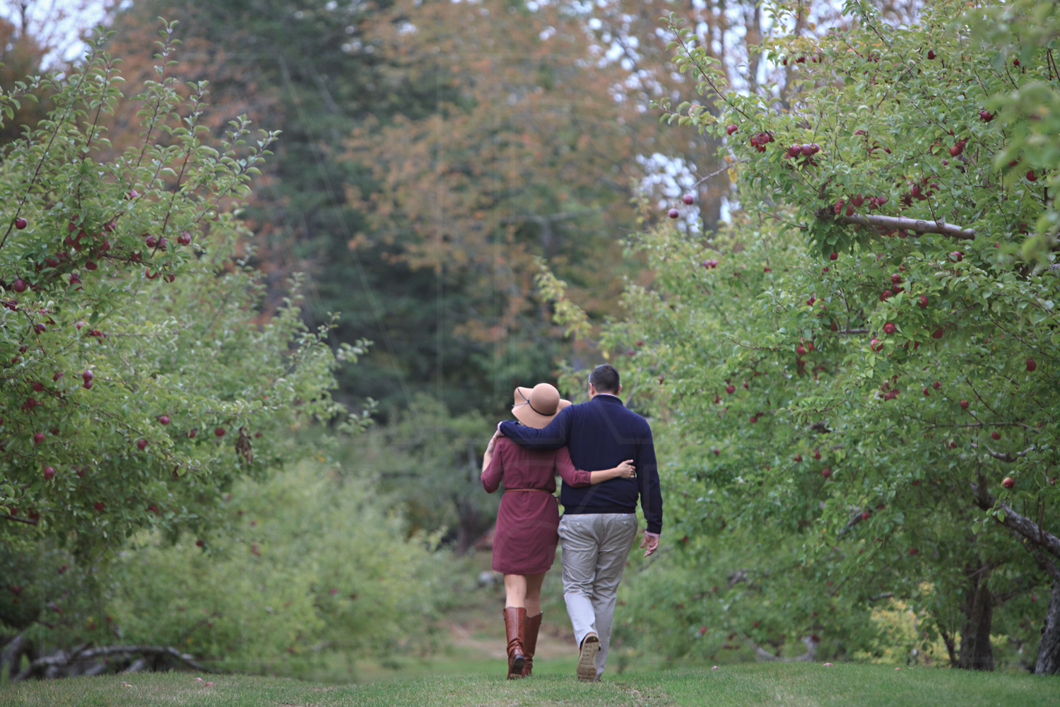 apple orchard engagement photographer