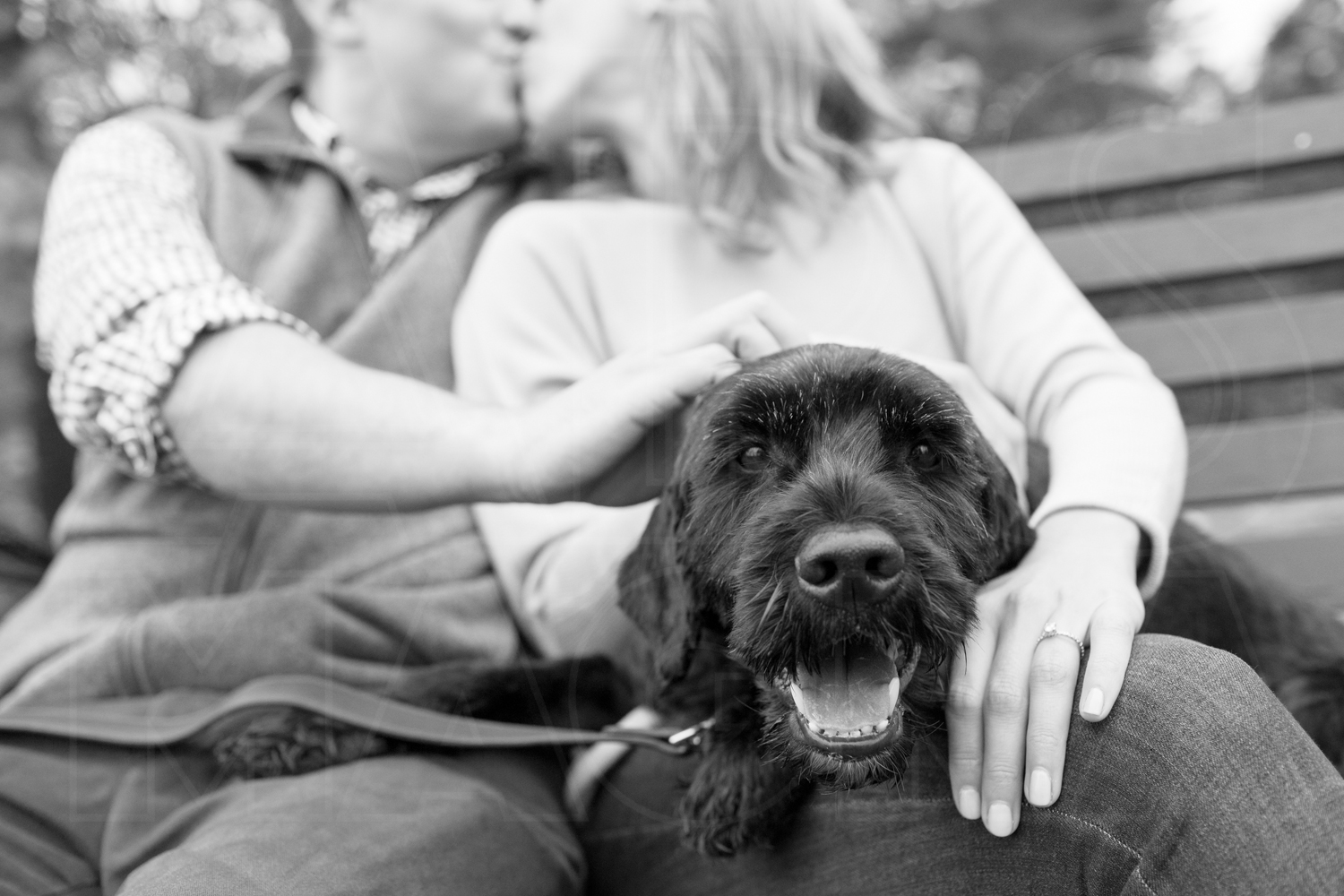 engagement portraits Portuguese water dog