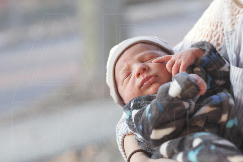 newborn portrait boston