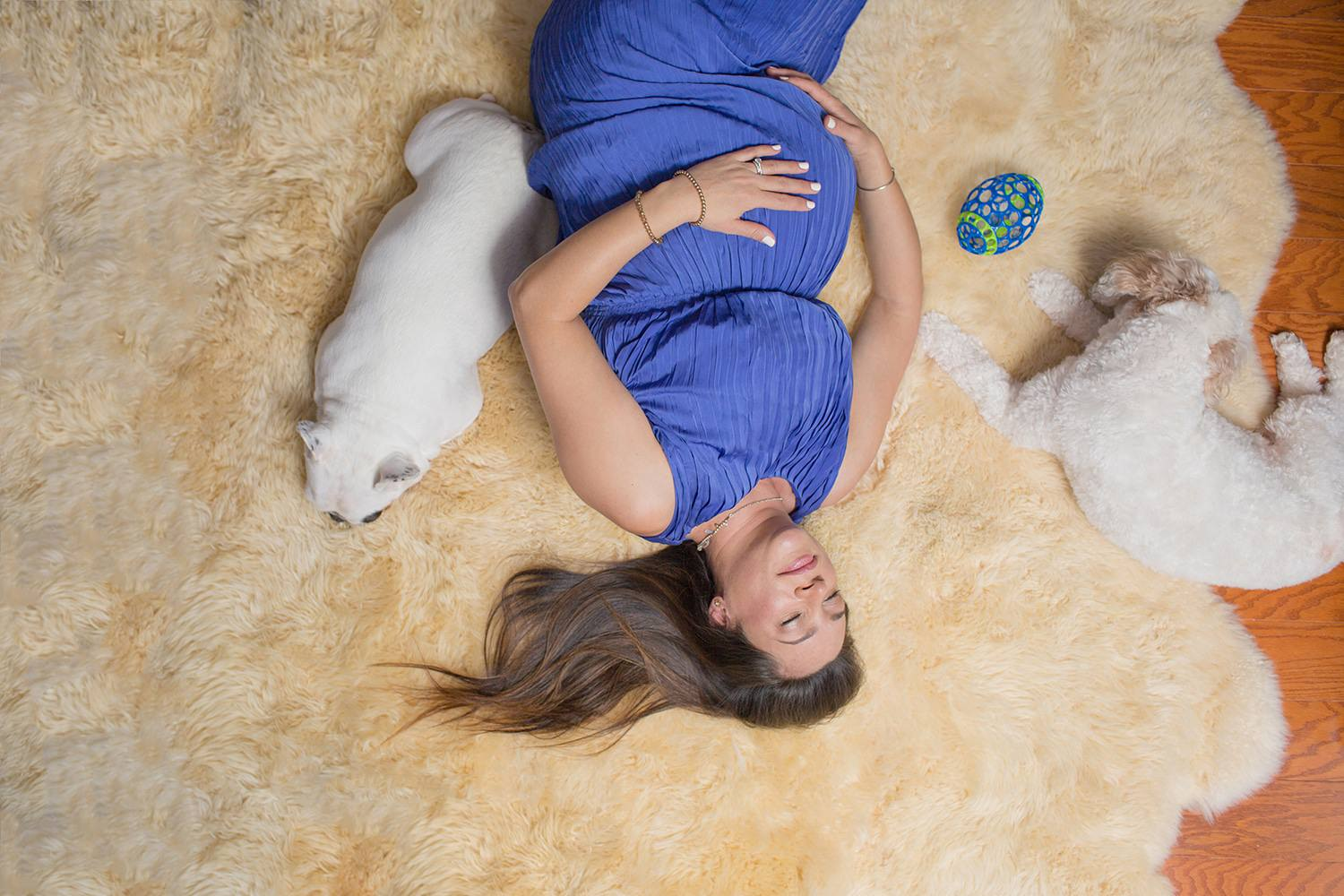 boston family photos in home maternity portraits with dogs