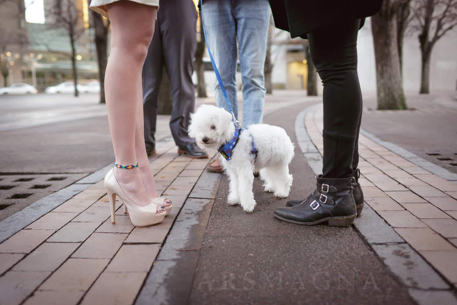 dog friendly downtown boston civil ceremony new england wedding photographer